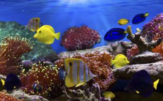 Red Sea underwater scene