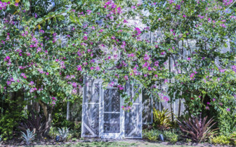 Botanical garden budding greenhouse
