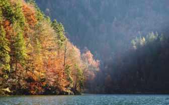 Colourful autumn forest on banks of lake Konigssee