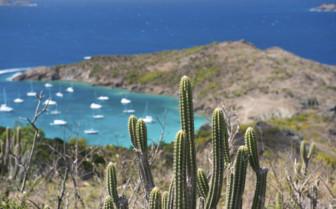 St Barts cactus