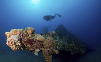 Scuba diver with sea fan