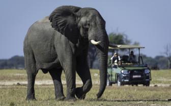 Elephant sighting at Linkwasha camp