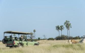 Safari lion viewing