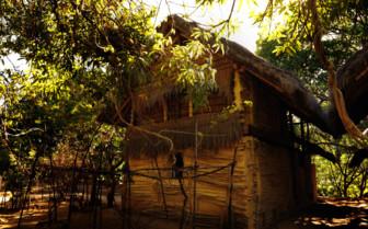 Cabana under mango trees