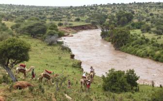 Camel Safari, Laikipia