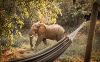 elephant by the hammock