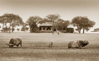 The wildlife in front of Singita Sabora Tented Camp