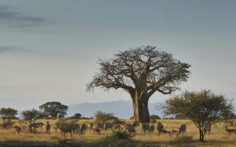 Ngorongoro Tarangire