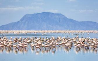 Flamingos in Northern Tanzania