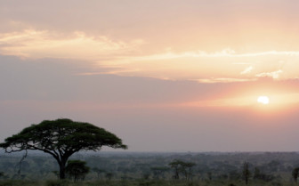 Landscape of Serengeti