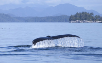 Whale Flute in British Columbia