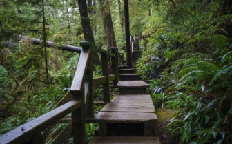 Walkway in the Forests on Vancouver Island