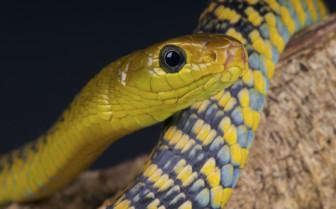 Tree Snake in Rwanda