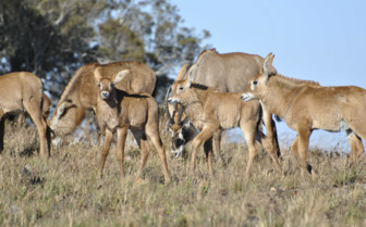 Wild Animals in the National Park