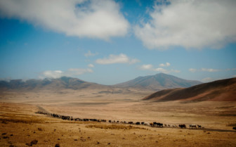 Herds in the Ngorongoro Crater