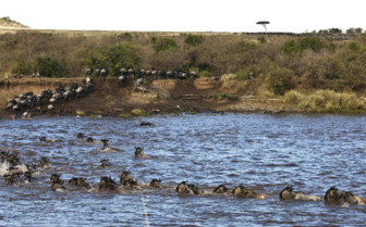 Great Migration Across the Masai Mara