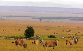 Landscape in the Masai Mara