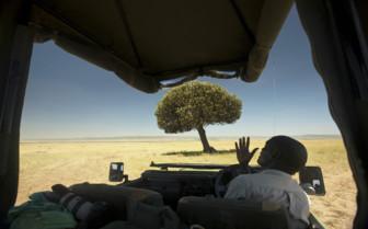 Single Tree on Safari