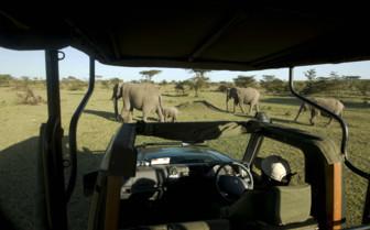 Great Plains Conservation Elephants