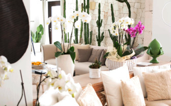 Orchids and indoor flowers
