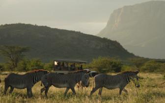 Game Drive with Zebra at Saruni Samburu