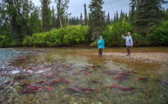 Red Salmon Fishing at Winterlake Lodge
