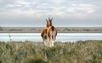 Argentina Wildlife