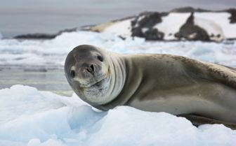 Seal Smile, Antarctica