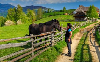 Woman petting Horses