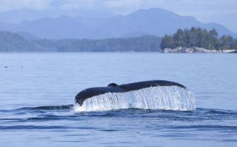 Whale Flute, British Columbia