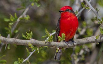 Bright Coloured Bird in Sao Tome and Principe