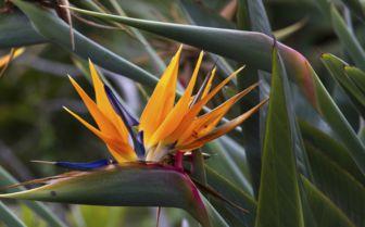 Wild Flowers, Sao Tome and Principe