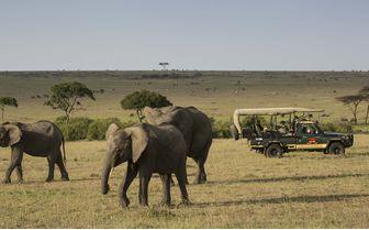 Game Drive Elephants