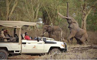 finch_hattons_elephant_and_vehicle