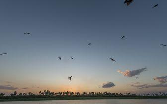 Selous_dawn_breaking_horizon