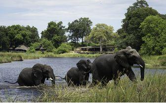 kings_pool_elephants_in_river
