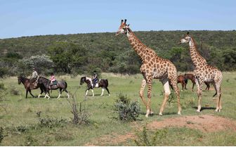 ants_hill_giraffes_and_horse_riding