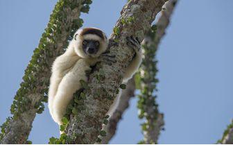 mandrare_wildlife