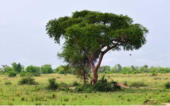 murchison landscape