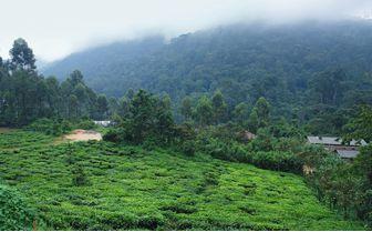 bwindi landscape