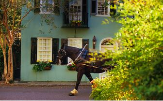 Horse pulling carriage
