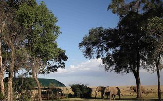 elephants in camp