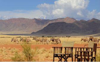 zebra crossing desert