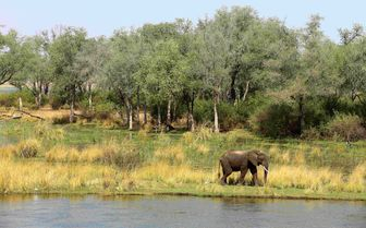 Elephant view from Amanzi Camp