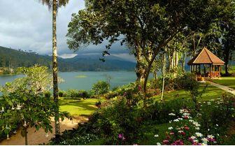 tea trails gardens