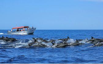 Dolphins in Los Cabos
