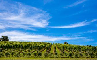 waiheke vineyard