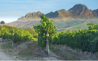 Misty mountains and vineyards