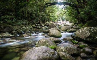Gorge rapids in Mossman