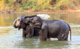 Elephants splashing in water
